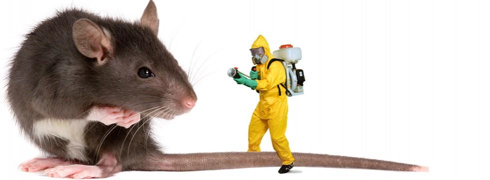 Pest Control 18
