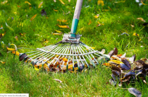 summer, lawn care