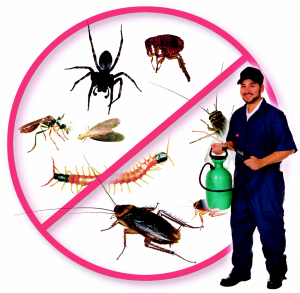 Pest Control 16