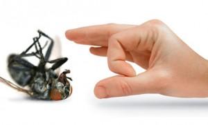 Pest Control 17